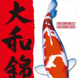 Yamato Nishiki